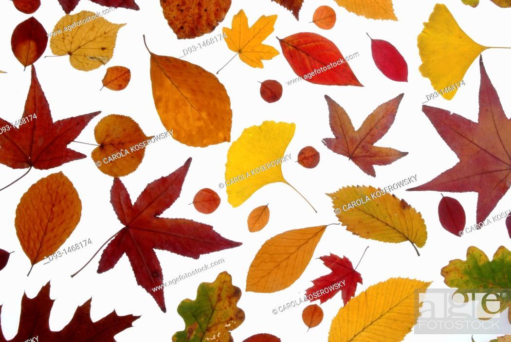 Stock Photo: Europe, D, Germany, Brandenburg, Leaf, Leaves, foliage.