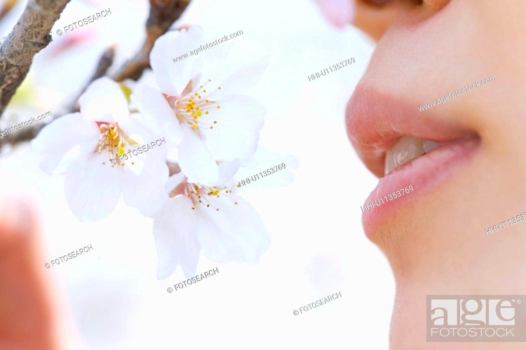 Stock Photo: Woman smelling cherry flowers, side view, close up, Japan.