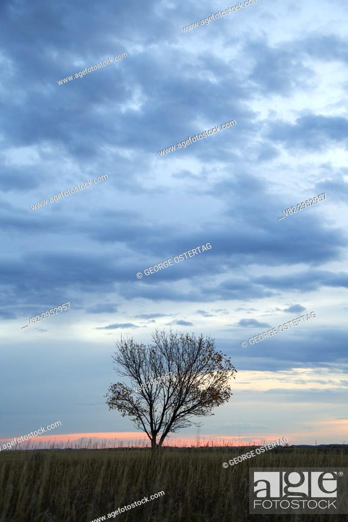 Stock Photo: Box elder sunrise at Skyline Vista, Theodore Roosevelt National Park-South Unit, North Dakota.