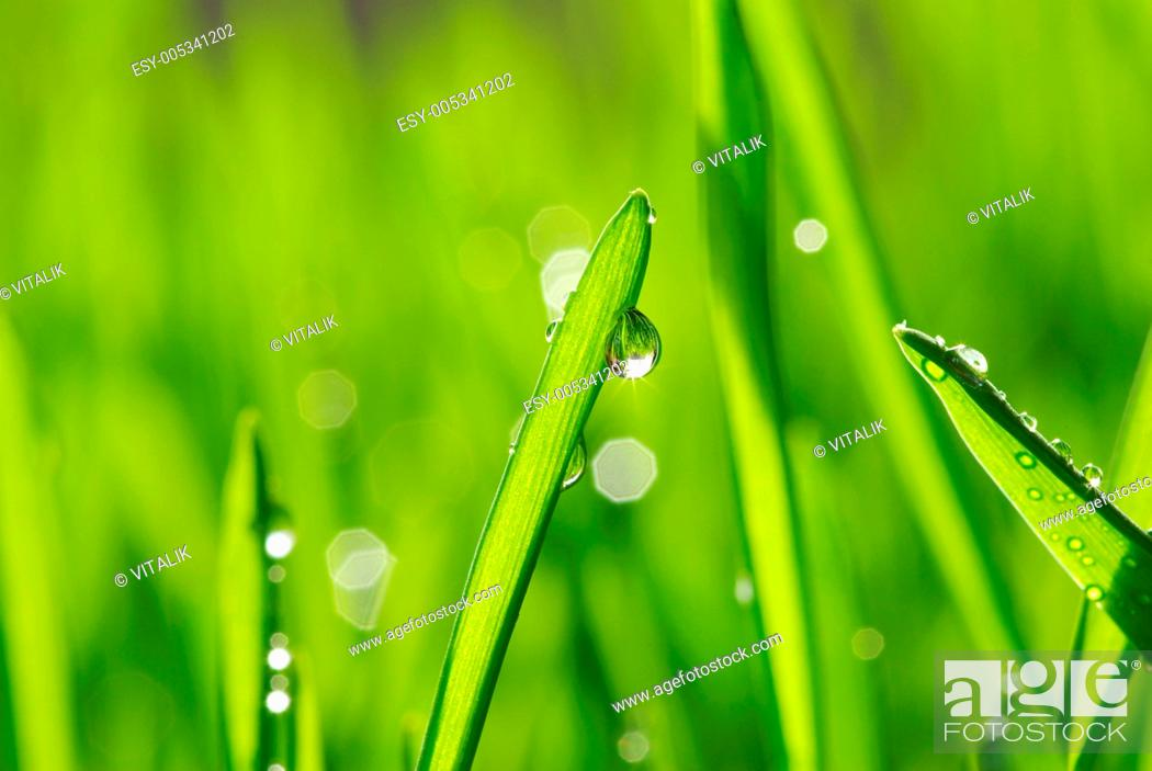 Stock Photo: drop on grass.