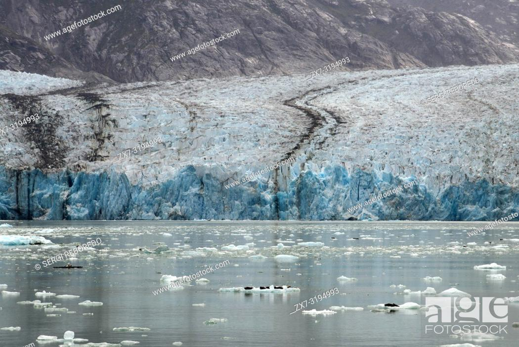 Photo de stock: Harbor seals (Phoca vitulina) on iceberg near the Dawes Glacier, Endicott Arm, Tongass National Forest, Alaska, USA. Cliff-walled fjords sliced into the.