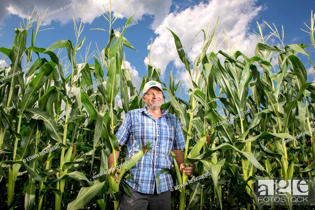 Stock Photo: Earl Buddy Hance, Secretary of Agriculture standing in a corn field in Port Republic, Maryland, USA.