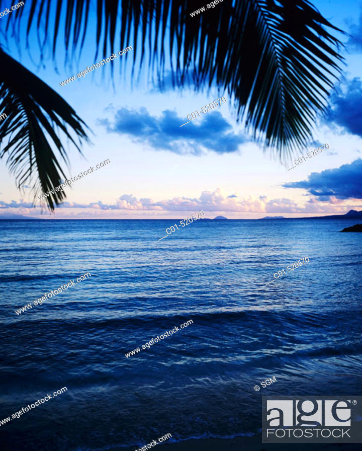 Stock Photo: Palm tree and sea after sunset. Guadeloupe. French West Indies.