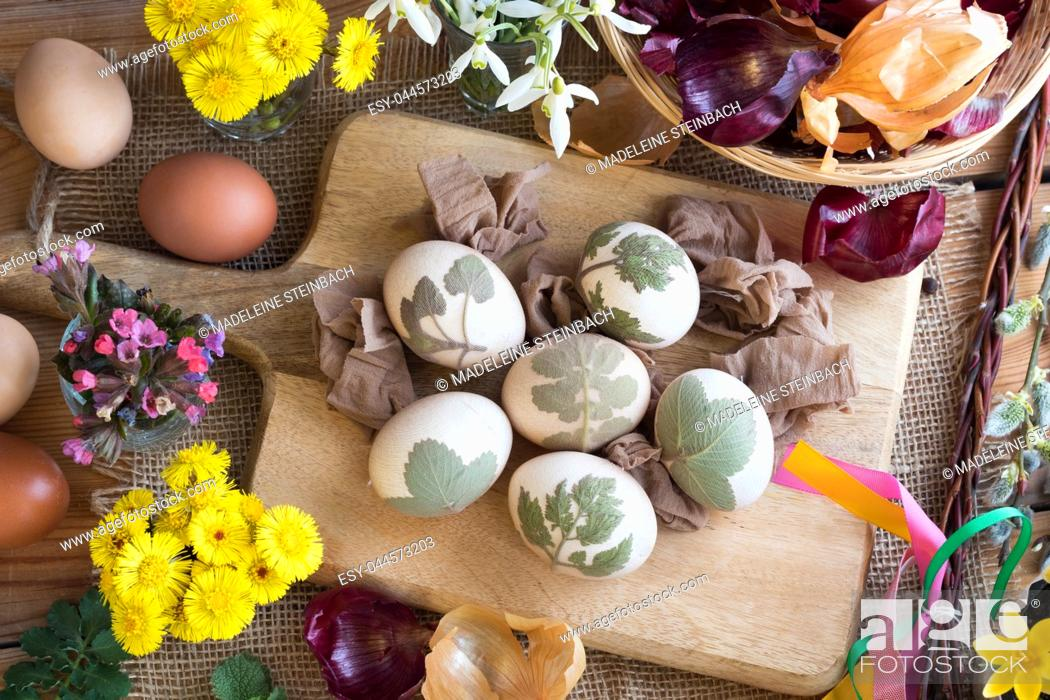 Stock Photo: Preparation of Easter eggs for dying with onion peels: eggs with a pattern of fresh herbs, onion peels, coltsfoot, lungwort.