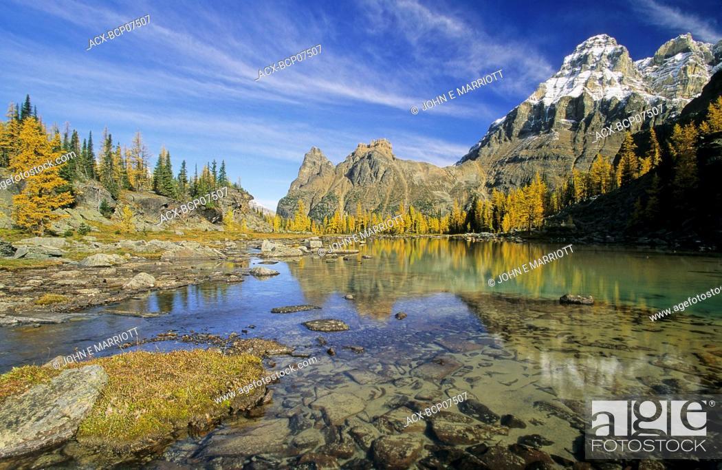 Stock Photo: Mount Huber, the Opabin Plateau and autumn larches, Lake O'Hara region, Yoho National Park, British Columbia, Canada.