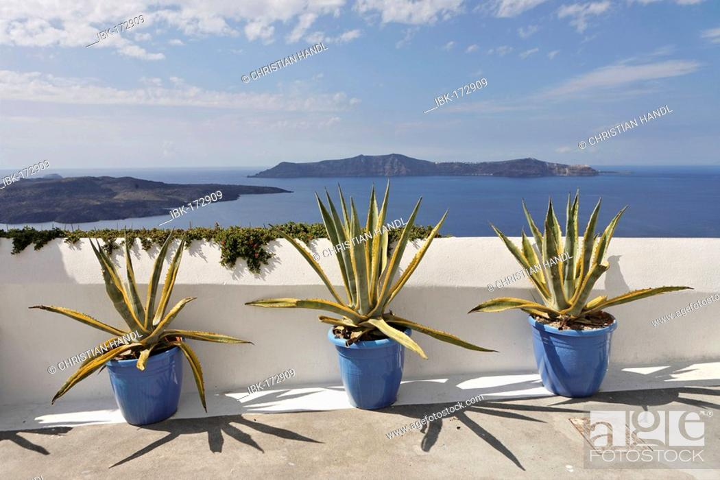 Stock Photo: Agaves (cultivars of agave americana) in three buckets, Thira, Santorini, Greece.