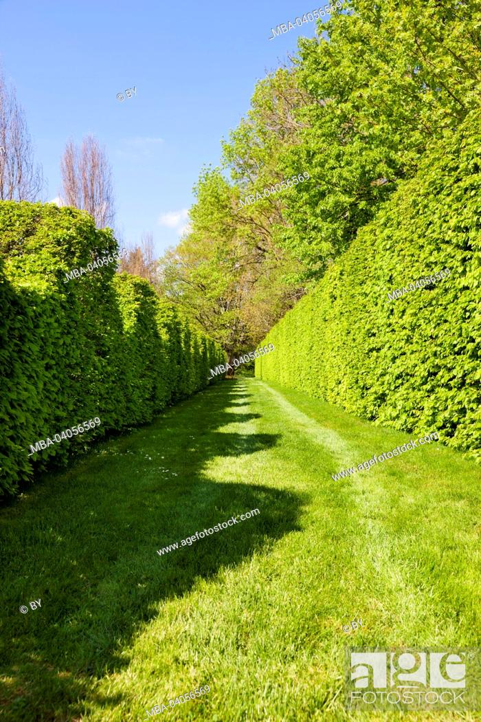 Stock Photo: Box hedge in the castle grounds, Cormatin, France.