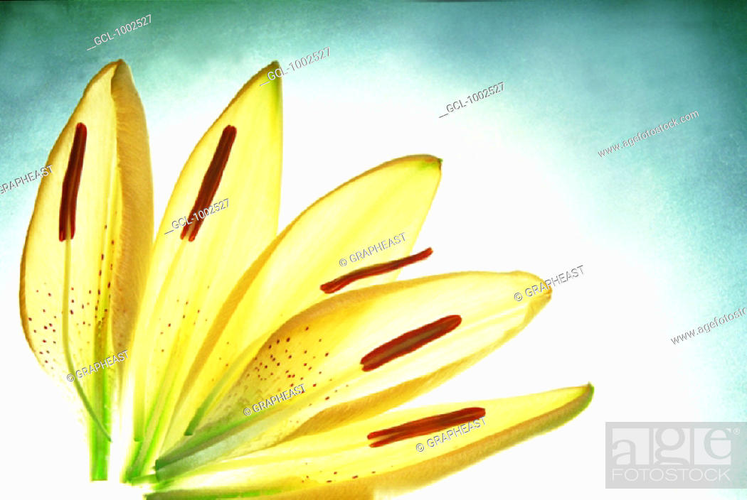 Stock Photo: Yellow flower petals.
