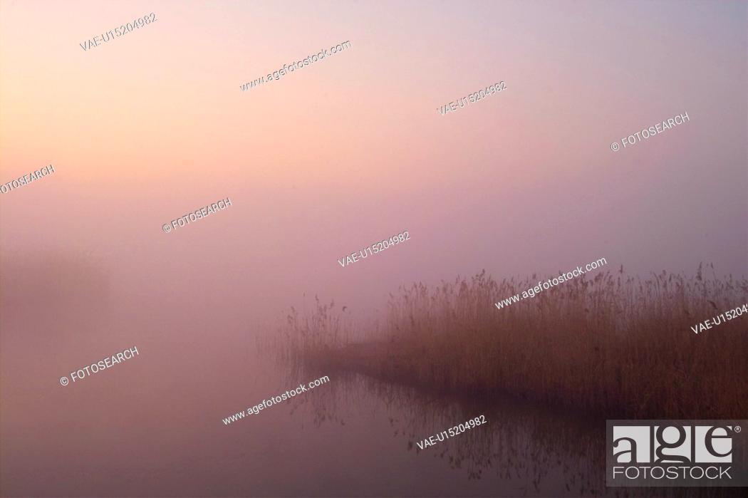 Photo de stock: plants, nature, eulalia, plant, scenery, grass, river.
