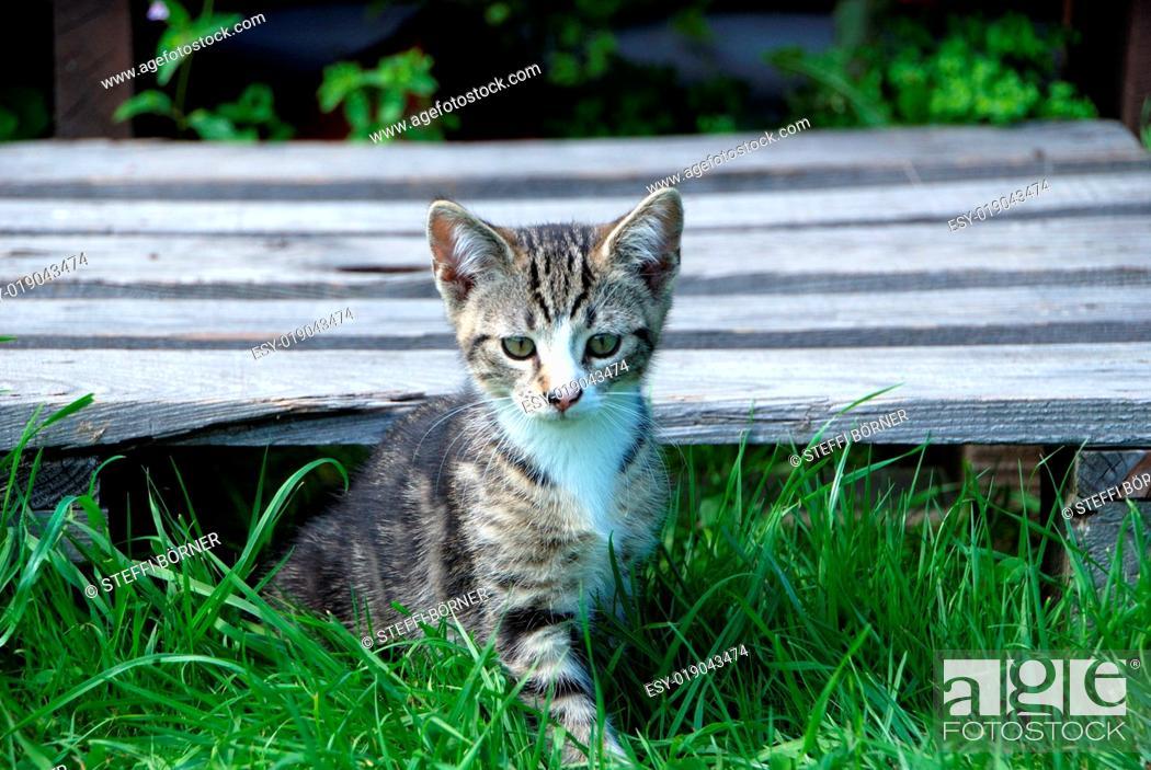 Stock Photo: gestreiftes Kätzchen im Gegenlicht.