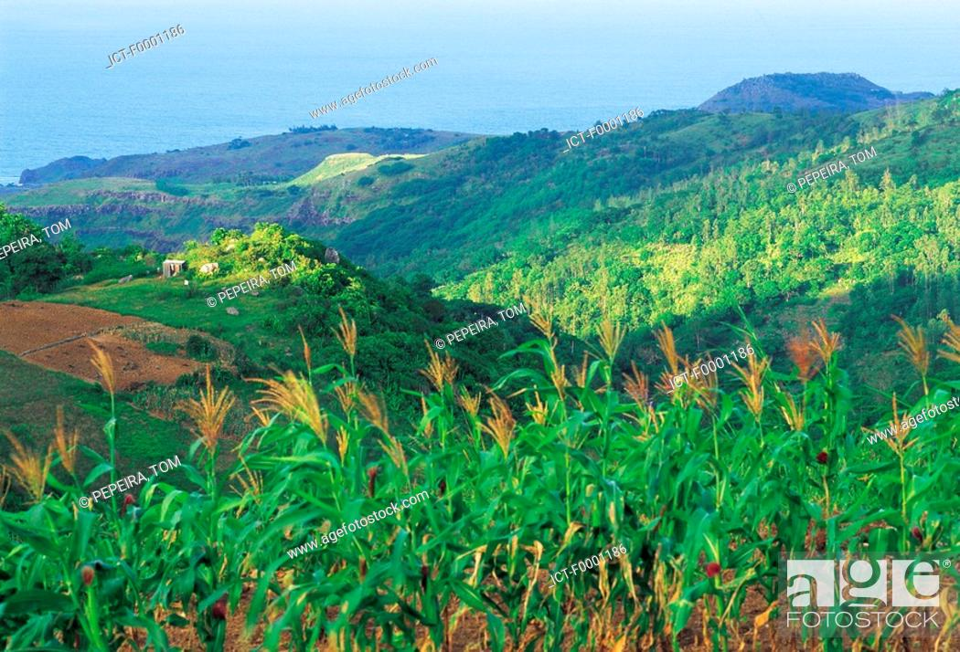 Stock Photo: Mauritius, Rodrigues, sugar cane fields, sea and mountains.