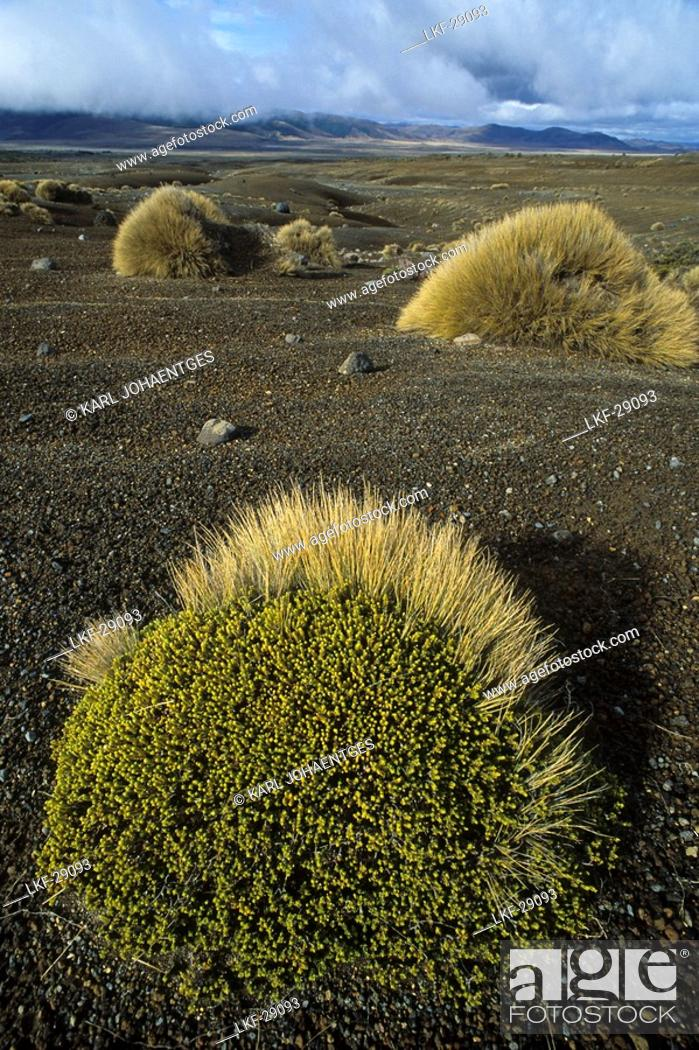 Photo de stock: Volcanic landscape of lava and tussock grass, Rangipo Desert, Tongariro National Park, North Island, New Zealand.