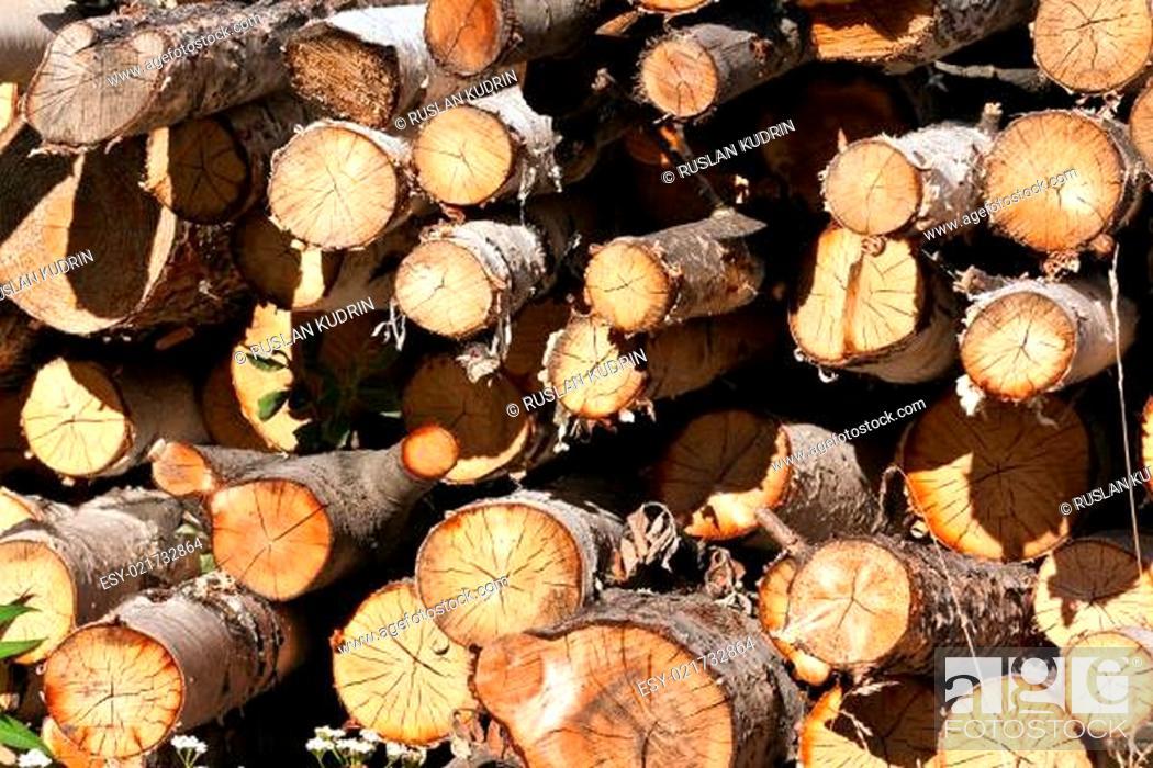 Imagen: round birch wood.
