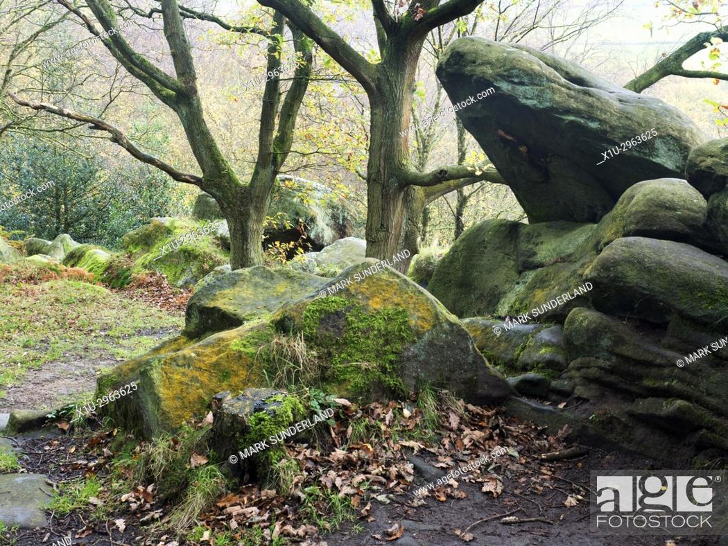 Imagen: Gritstone Rocks at Birk Crag in Autumn Birk Wood Harrogate Yorkshire England.