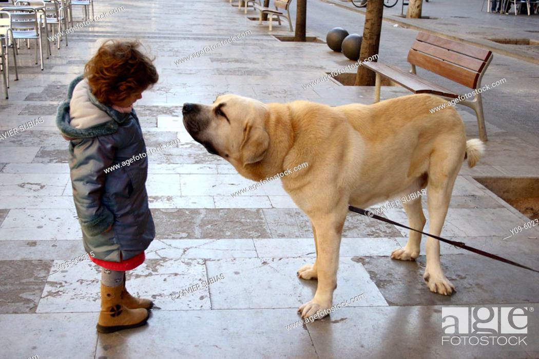Stock Photo: 6 year old girl with Spanish mastiff.