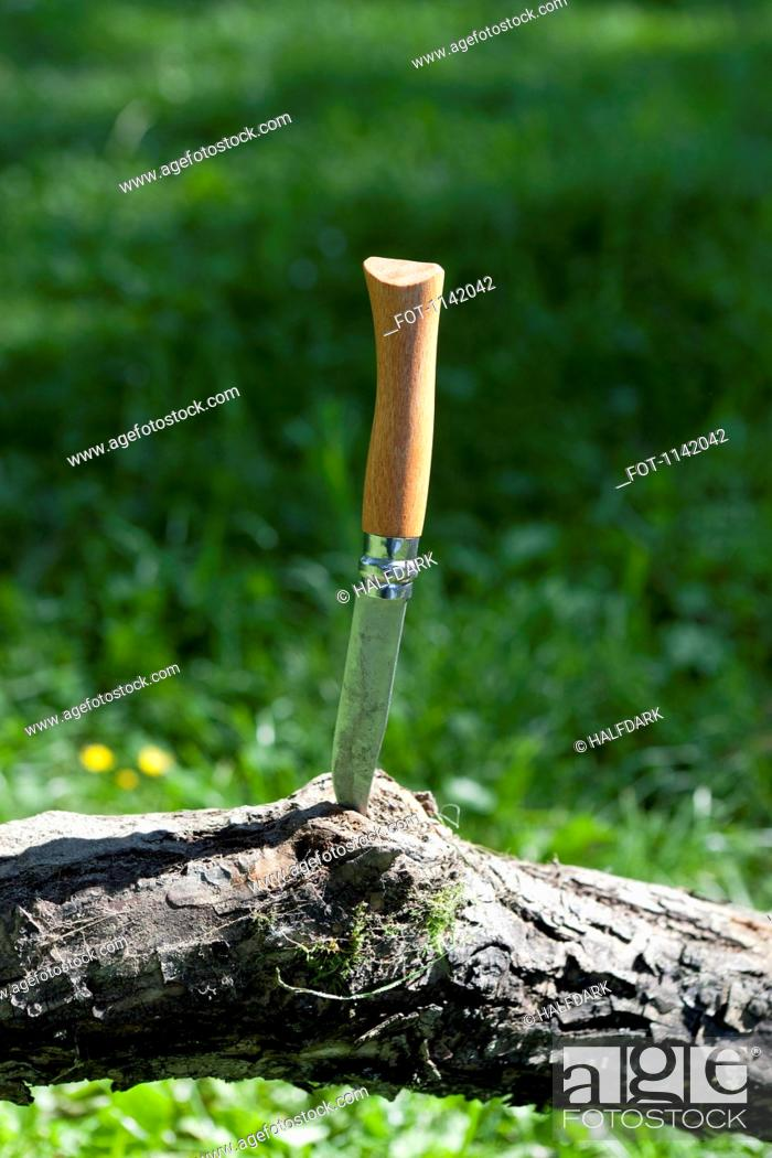 Stock Photo: A pocket knife wedged into a tree branch.