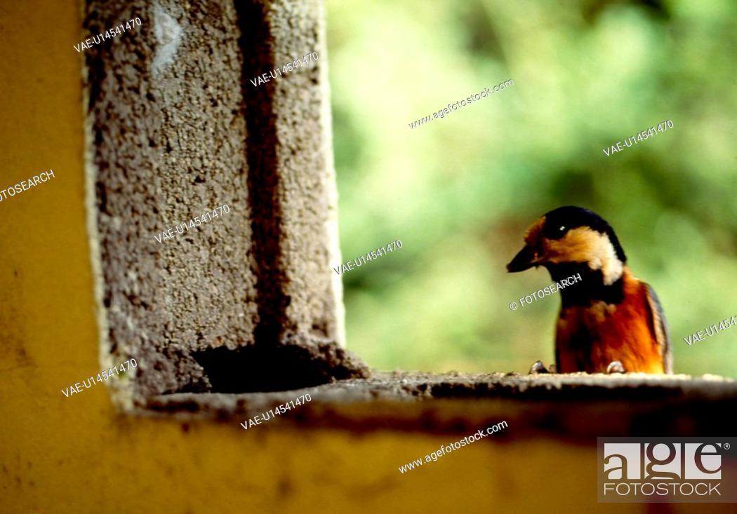 Stock Photo: animal, nature, wild, structure, window, vertebrate, landscape.