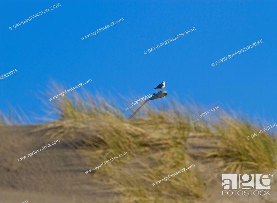 Imagen: Bird on a Lamp Post.