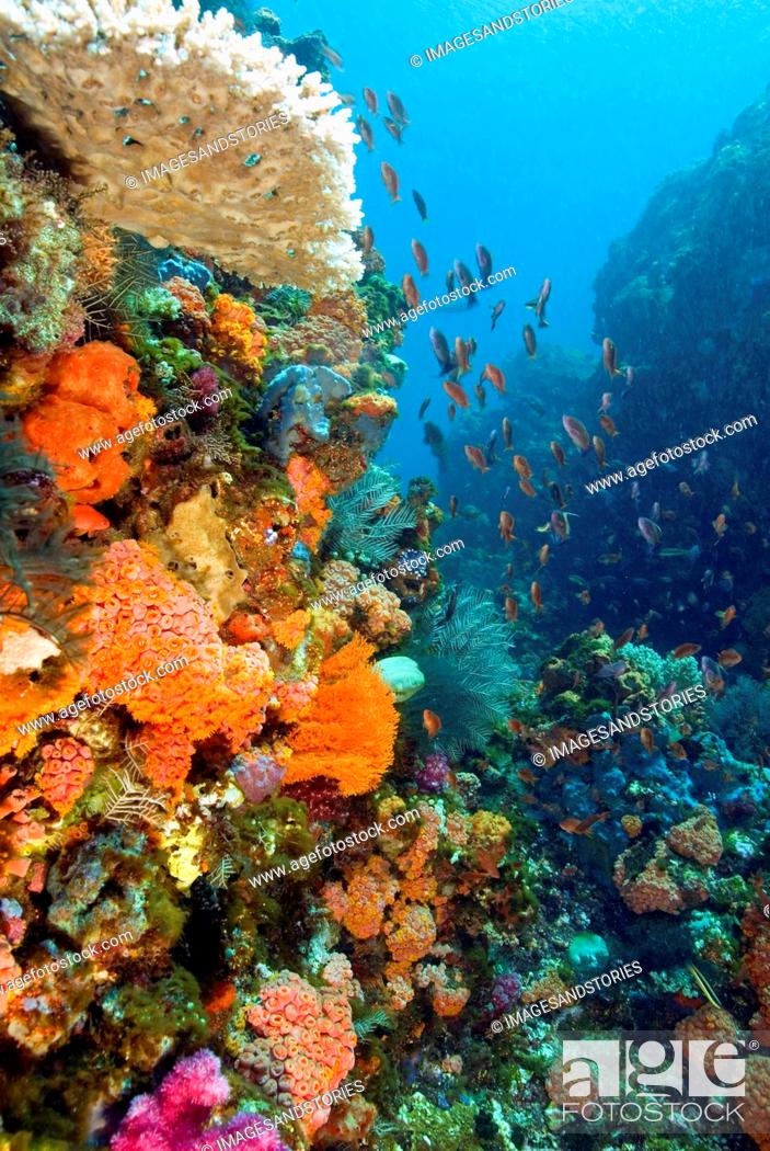 Stock Photo: reef with a wide and colourful range of species, Indonesia.