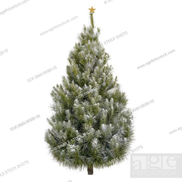 Stock Photo: christmas tree.
