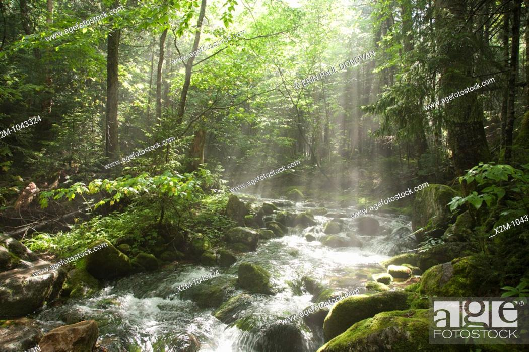 Stock Photo: The sun breaks through the forest along the Ammonoosuc Ravine Trail during the summer months  Located in the White Mountains, New Hampshire USA.