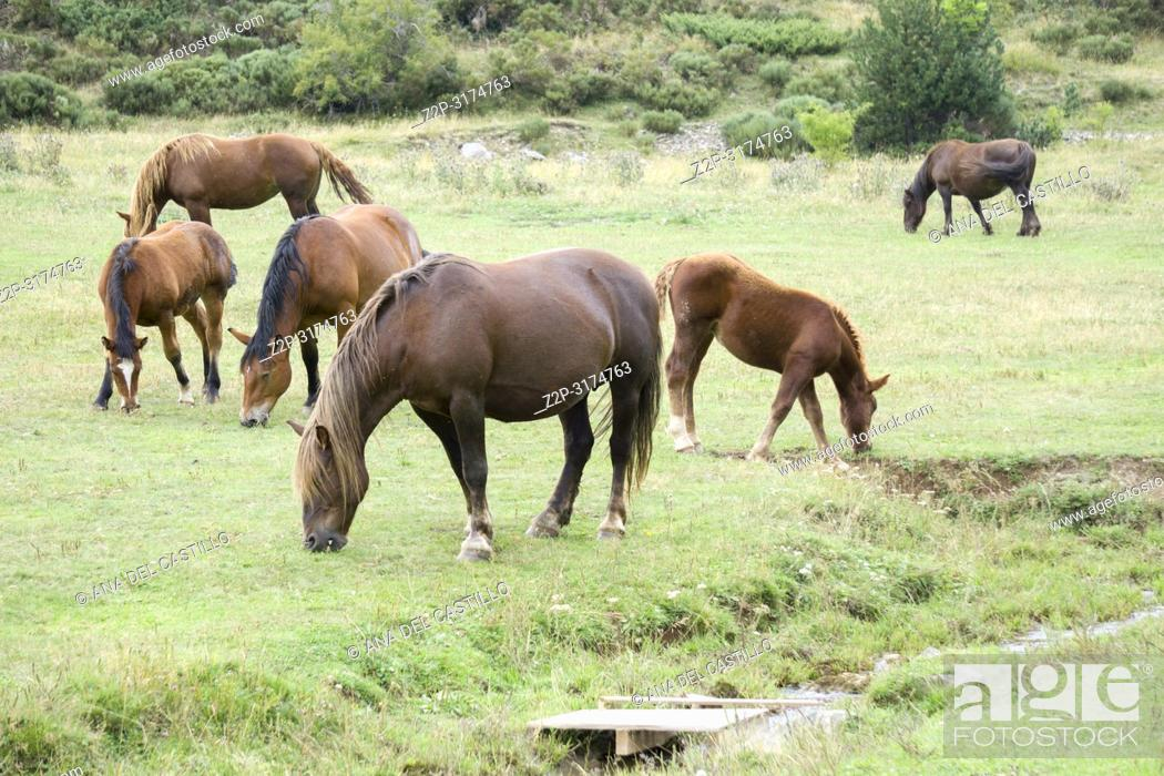 Stock Photo: Wild horses Boi valley Lleida Catalunya Spain.
