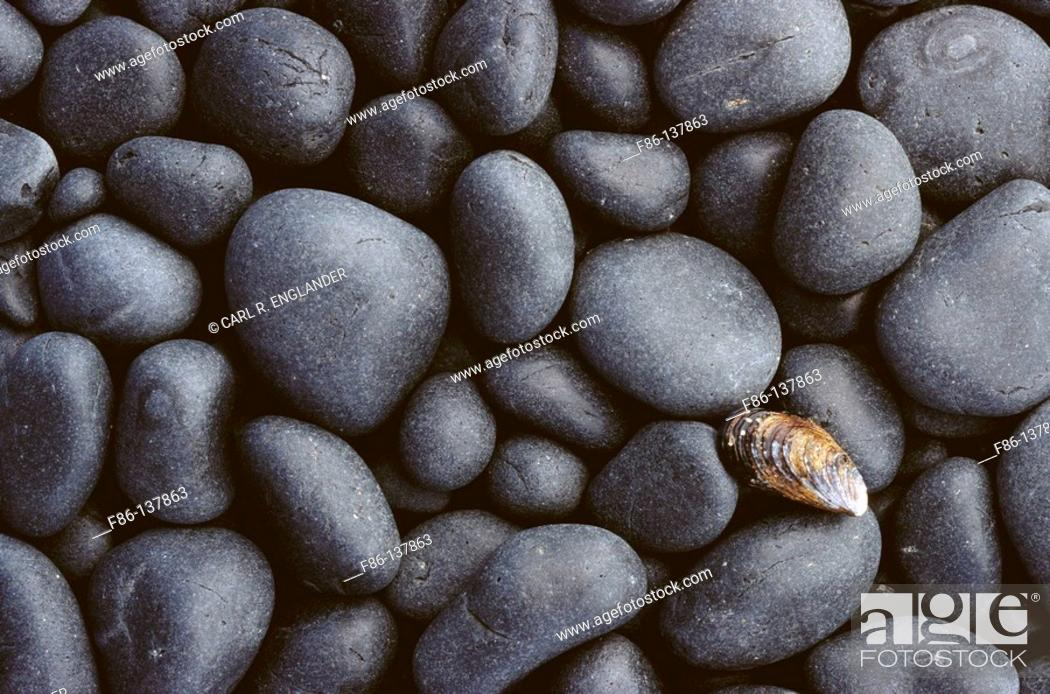 Stock Photo: Shell and basalt cobble stones.