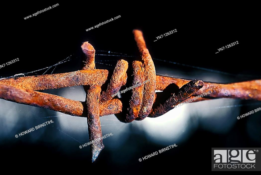 Stock Photo: Rusted barbed wire in extreme close up.