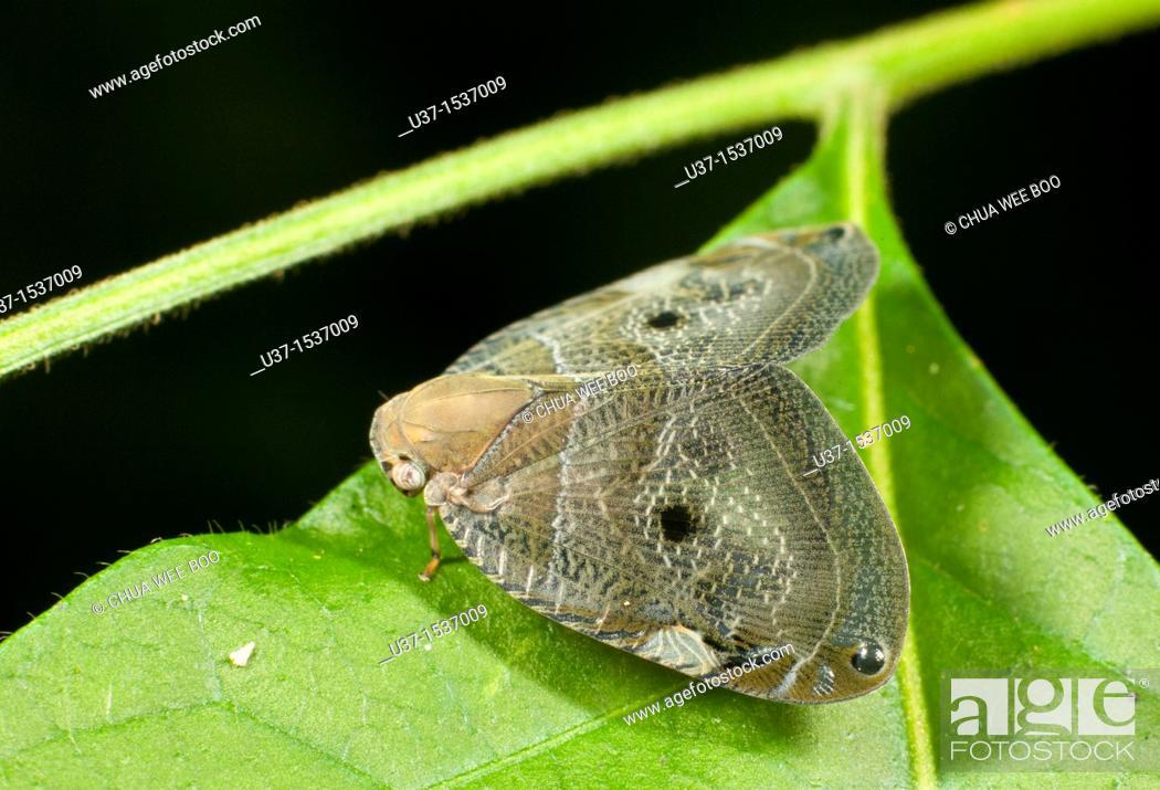 Stock Photo: Moth.