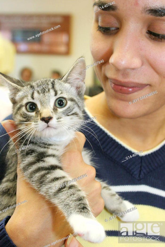 Humane Society, adoption center, Hispanic female, kitten