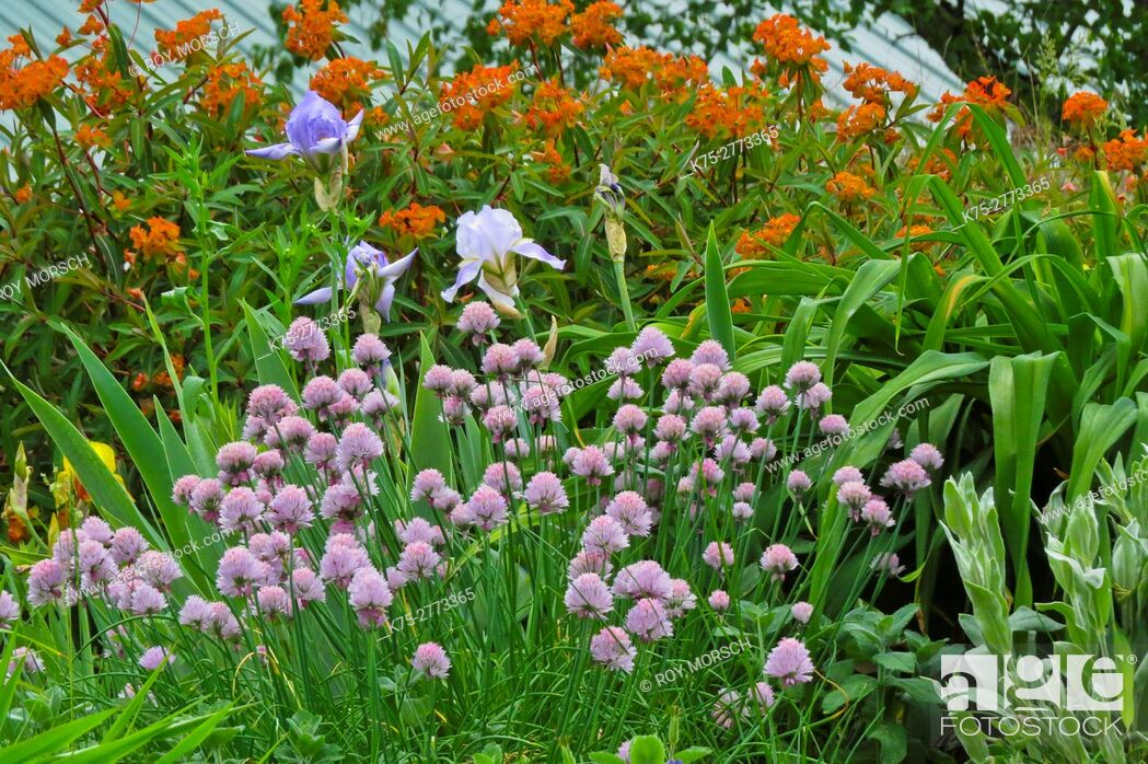 Imagen: summer flower garden.