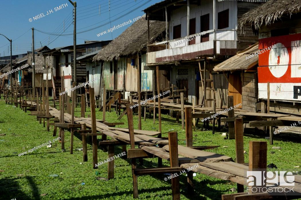 Elegant Stock Photo   Elevated Walkway And Houses On Stilts To Accomodate The  Annual Flood Of The Amazon River. Abundant Macrophytes Because Of Water  Pollution
