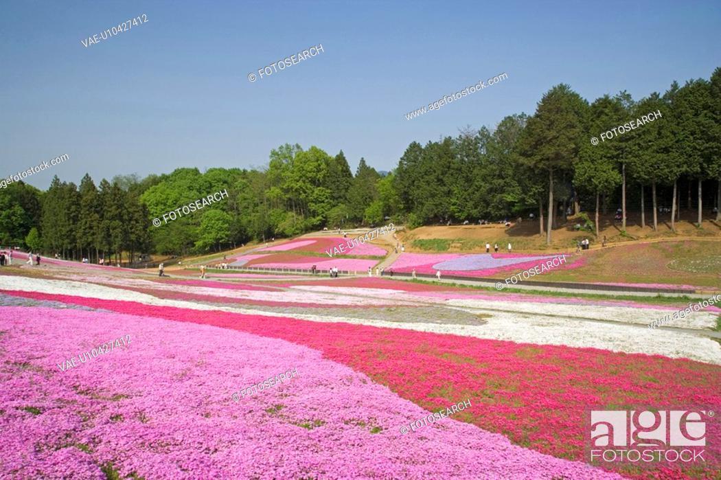 Stock Photo: Hitsujiyama park.