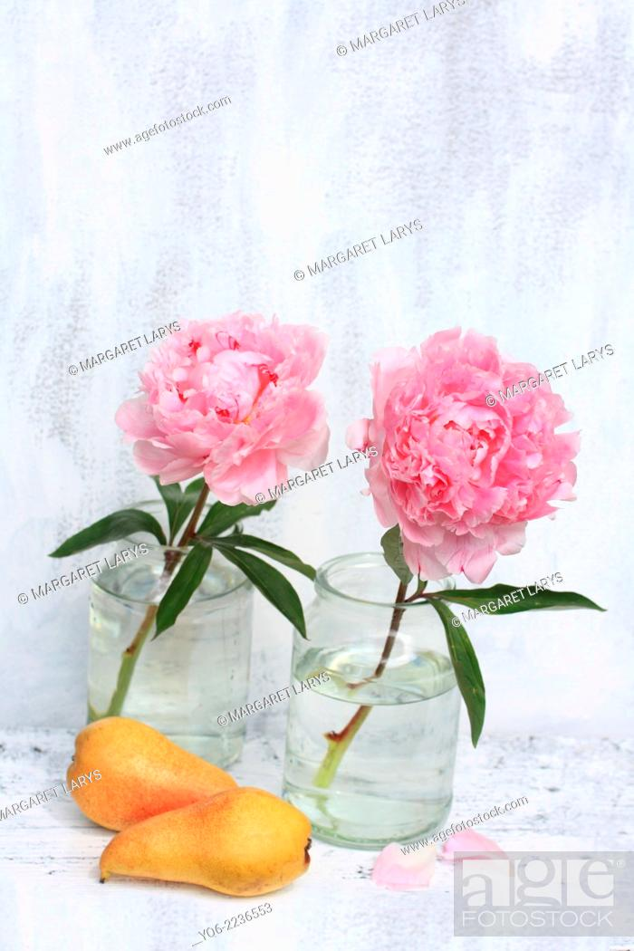 Stock Photo: Beautiful soft pink peonies artistic still life on white painted background.