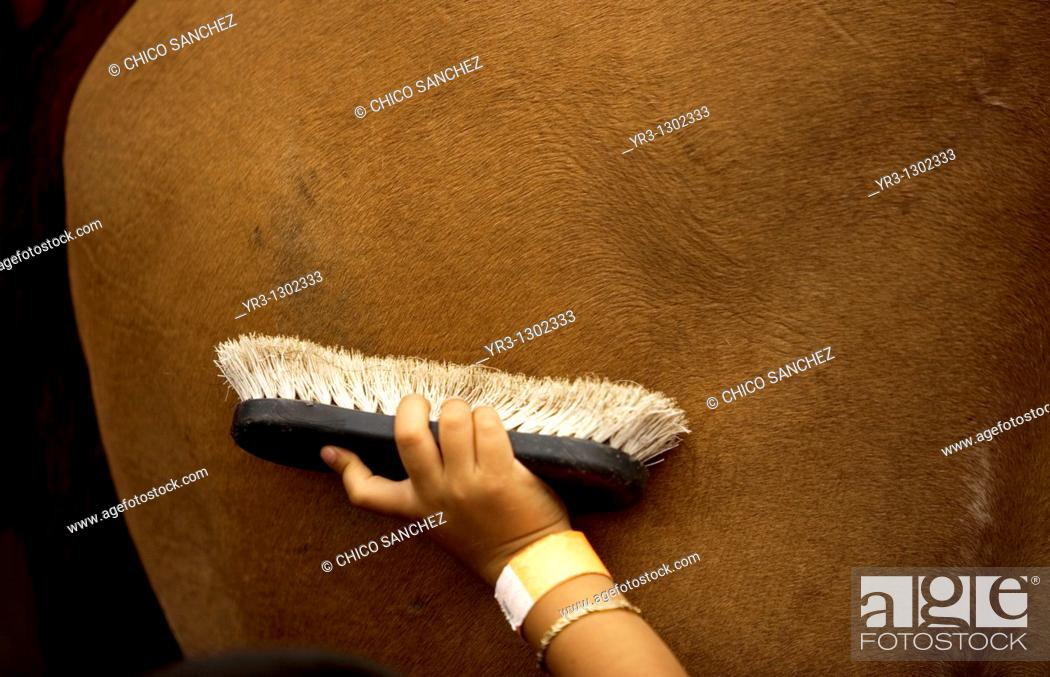 Stock Photo: A boy brushes a horse during summer camp at a horse therapy center in Mexico City, July 29, 2010.