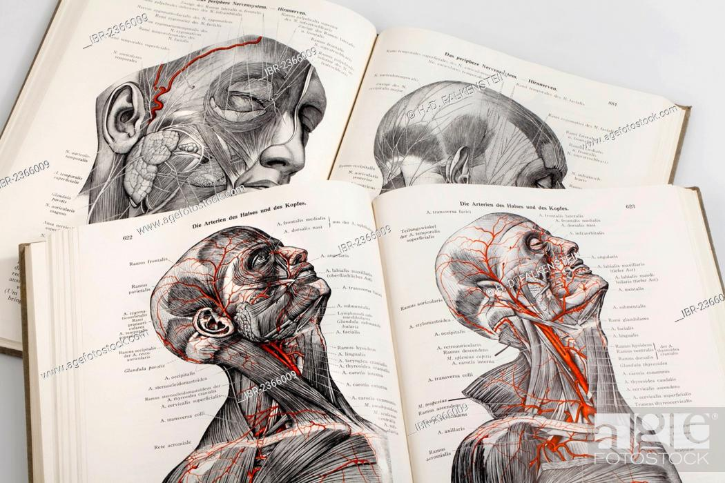 Depictions from a medical book Stock Photos and Images | age fotostock
