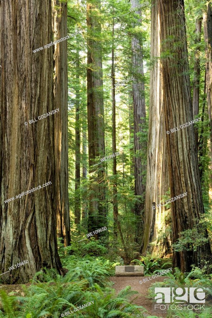 Imagen: Avenue of the Giants / Rockefeller Forest - Humboldt Redwoods State Park, California.