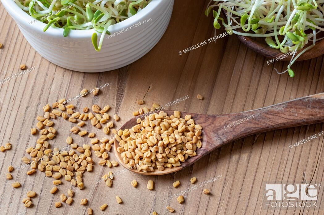 Stock Photo: Dry fenugreek seeds on a spoon with five-day sprouts in the background.