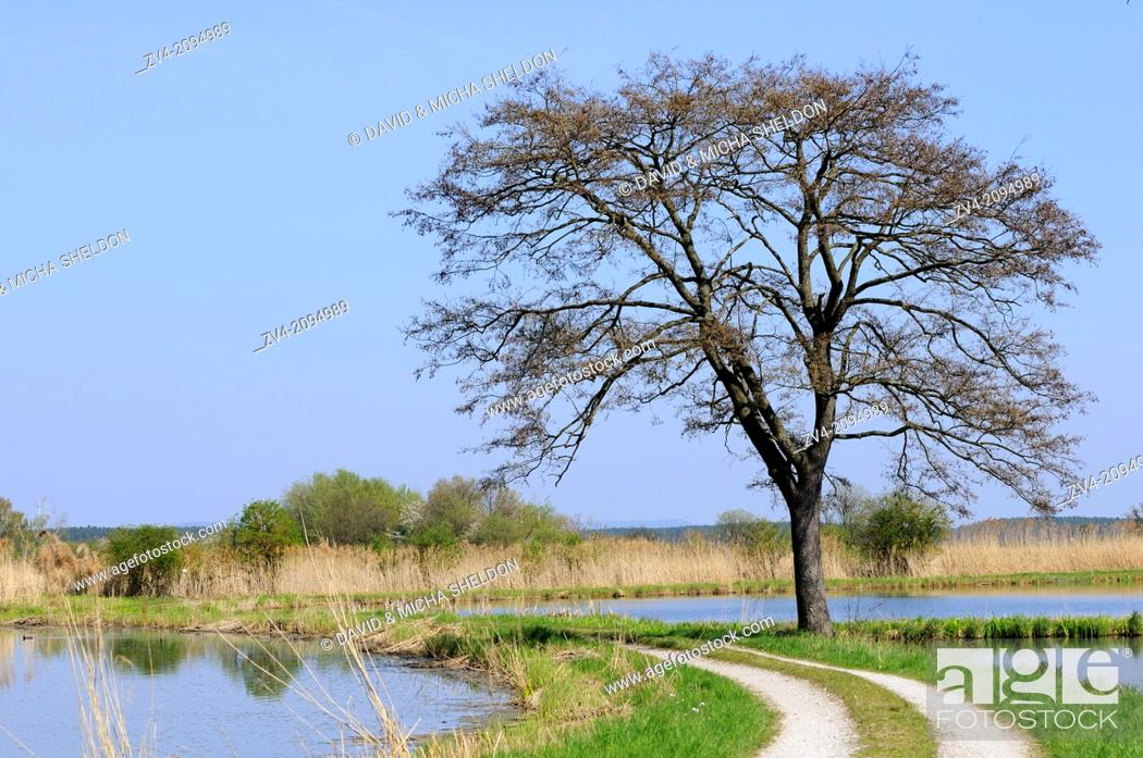 Stock Photo: Landscape of a tree next to a little trail going through ponds.