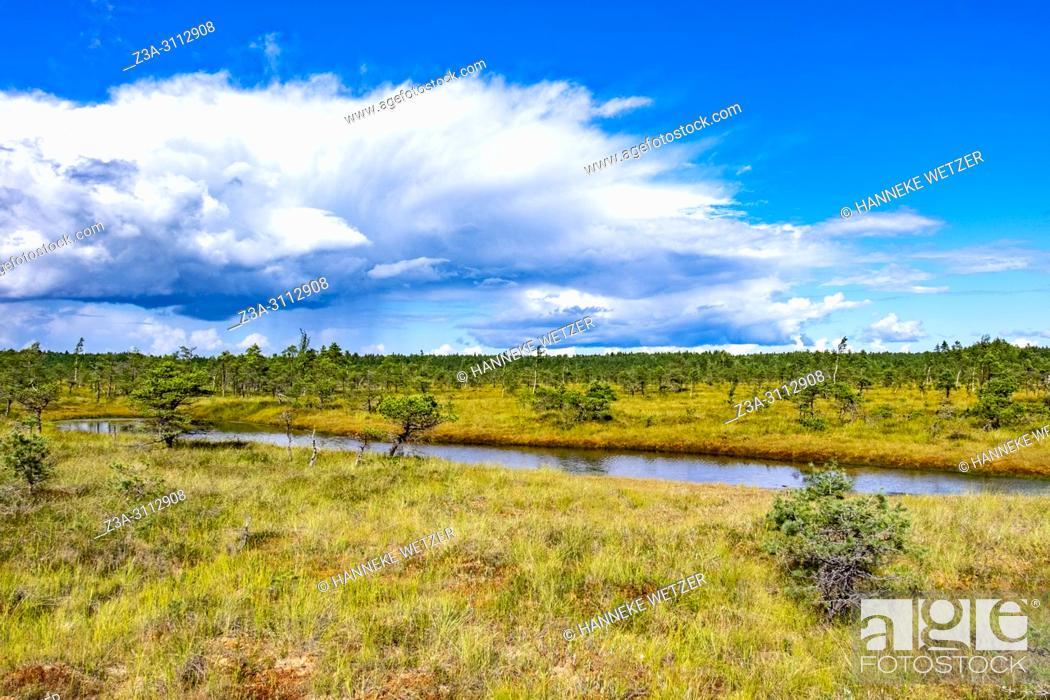 Stock Photo: Kemeri Bog Trail, Kemeri National Park, Latvia, Baltic States, Europe.
