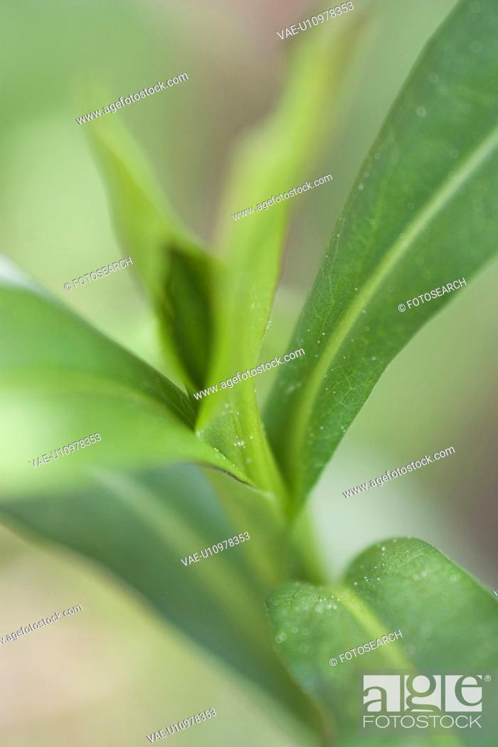 Stock Photo: body, curl, flora.