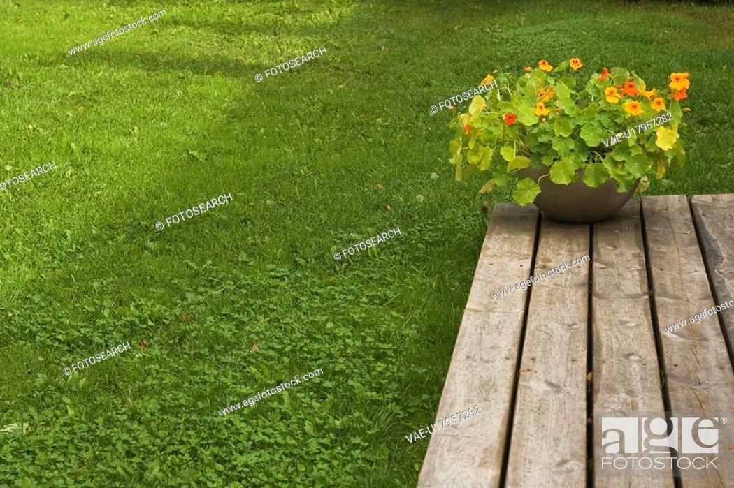 Stock Photo: Wood, Flowers.