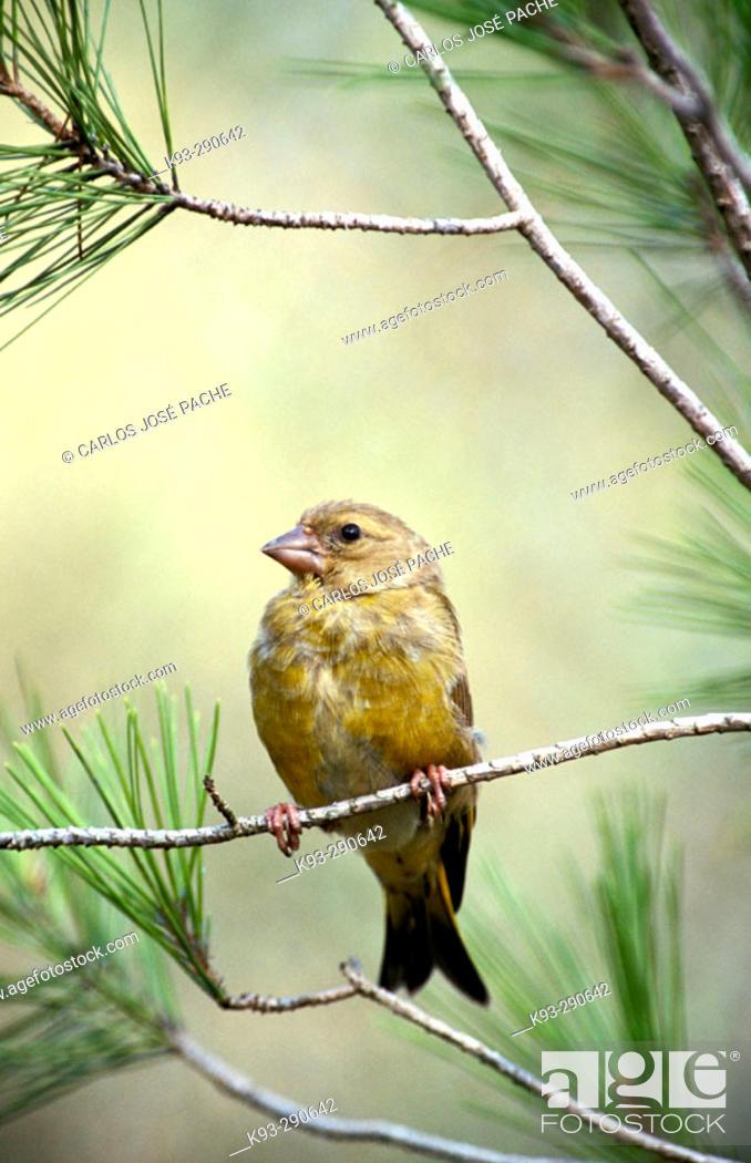 Imagen: Wildlife.