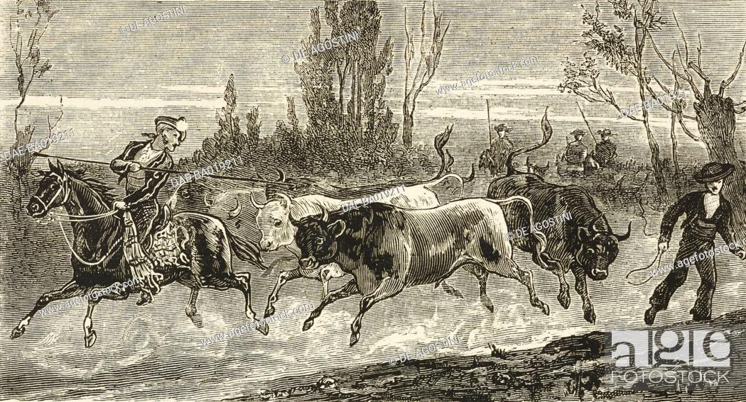 Stock Photo: Securing bulls, Sunday afternoon in the Bull ring at Madrid, Spain, illustration from the magazine The Graphic, volume XXIV, no 624, November 12, 1881.