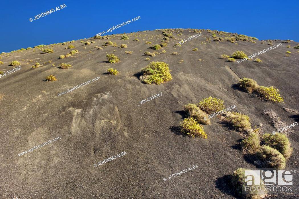 Stock Photo: Volcanic landscape, Timanfaya National Park. Lanzarote Island. Canary Islands Spain. Europe.