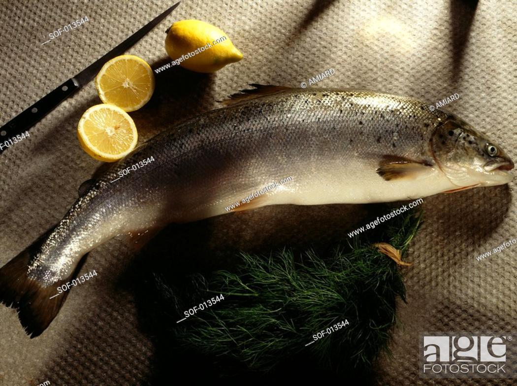 Stock Photo: salmon.