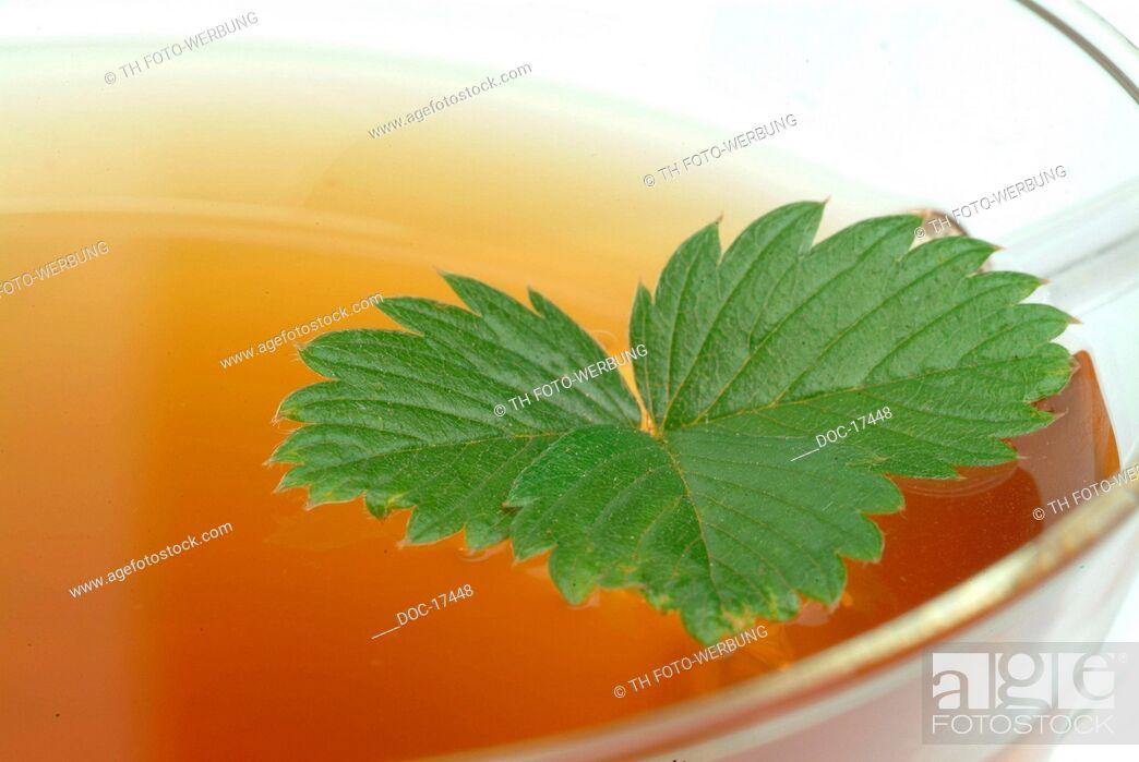Imagen: tea made of leaves of wild strawberry - Strawberryleaftea - medicinal tea - herbtea - Fragaria vesca - Fragole comune - te.