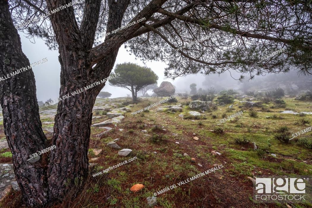 Stock Photo: Granite and conifers between the fog in Cadalso de los Vidrios. Madrid. Spain. Europe.