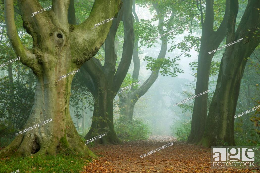 Imagen: Autumn morning in Stanmer Park, East Sussex, England.