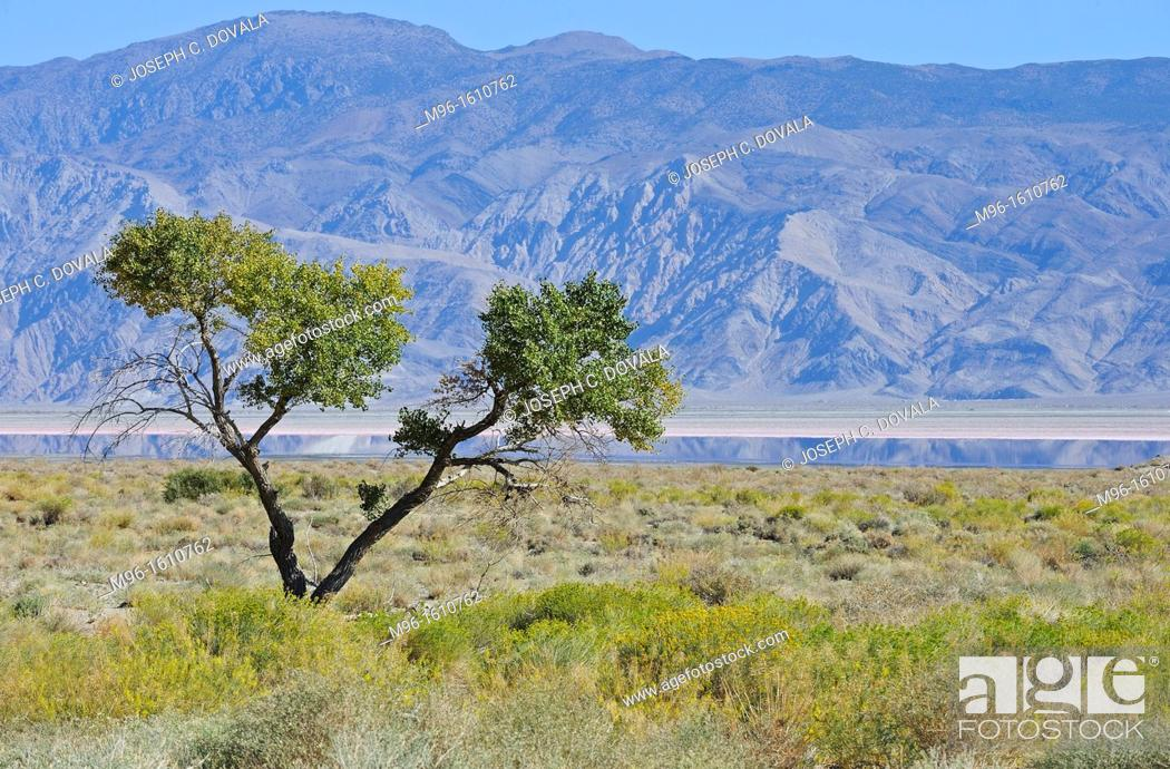 Stock Photo: Lone tree in Owens Lake bed, California, USA.